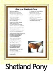Click to View the Shetland Pony Ode